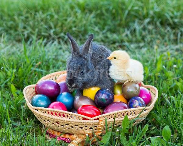 Geleneksel Paskalya gelenek easter bunny civciv sepet Stok fotoğraf © barabasa
