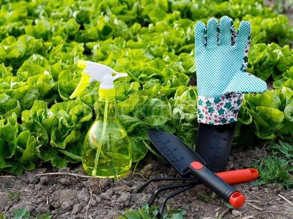 Gartengeräte verlockend Gartenarbeit Arbeit farbenreich Werkzeuge Stock foto © barabasa