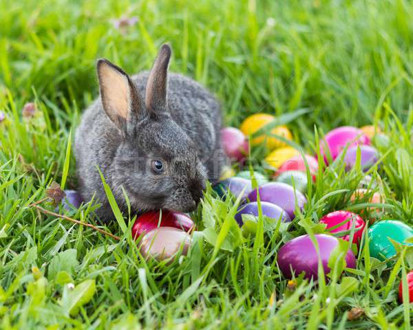 Cute Easter Bunny Stock photo © barabasa