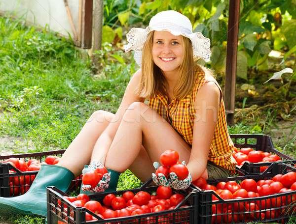 Tomato Sorting Stock photo © barabasa