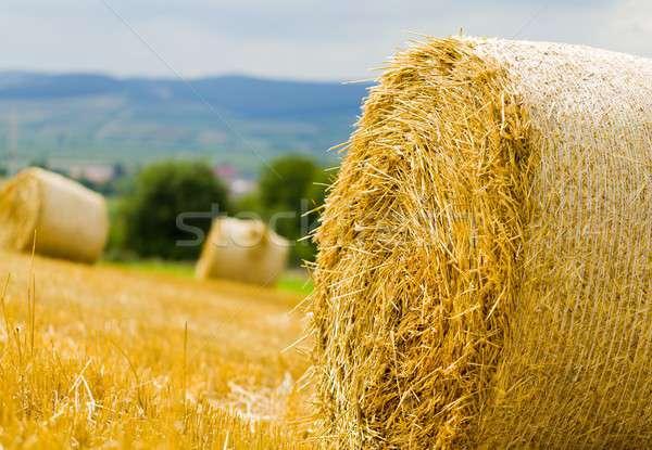 Productivo agricultura primer plano paca grano cosecha Foto stock © barabasa