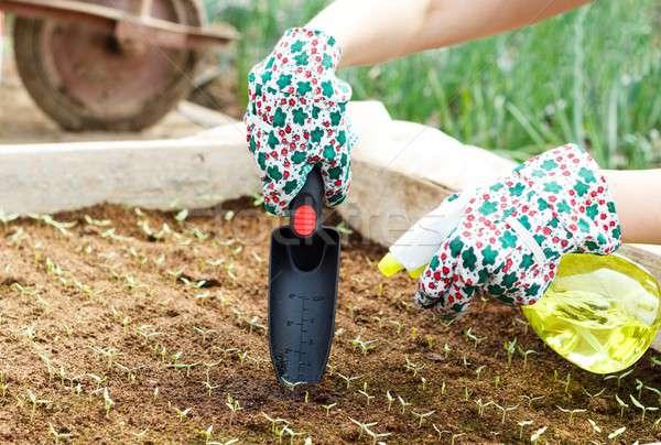 Seedlings Culture Nursing Stock photo © barabasa