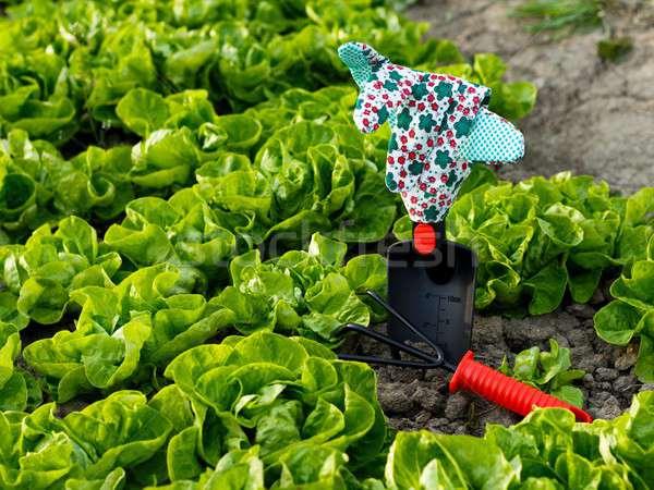 Trabalhar quebrar saudável salada cama vários Foto stock © barabasa