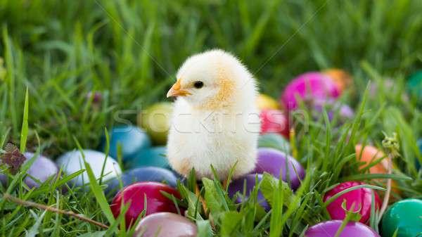 Húsvét csirke kicsi fű húsvéti tojások boldog Stock fotó © barabasa