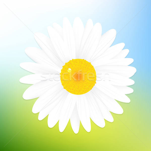 Stock photo: Camomile And Sky