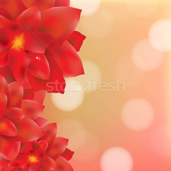 Red Flower With Water Drops Bokeh Stock photo © barbaliss