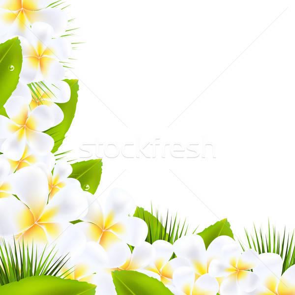 çiçekler yaprak çerçeve spa bitki Stok fotoğraf © barbaliss