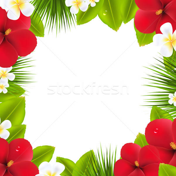 Verde confine tropicali elementi isolato bianco Foto d'archivio © barbaliss