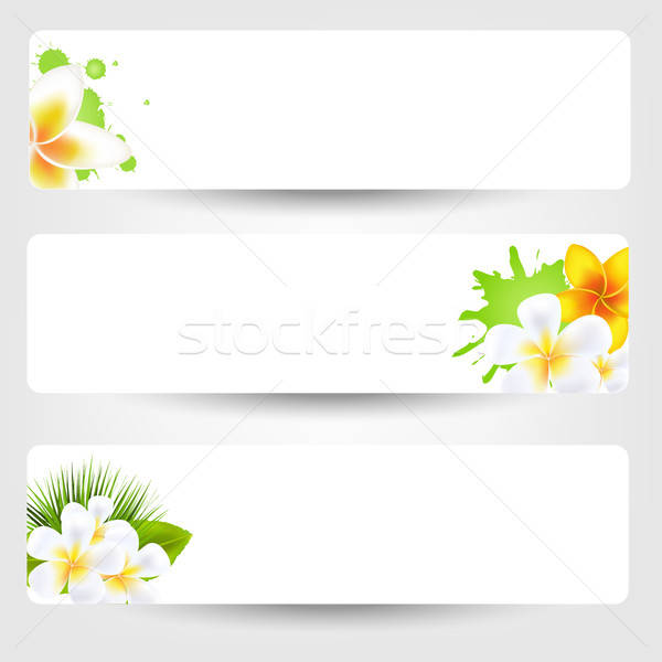 Banners With Flowers Frangipani Stock photo © barbaliss