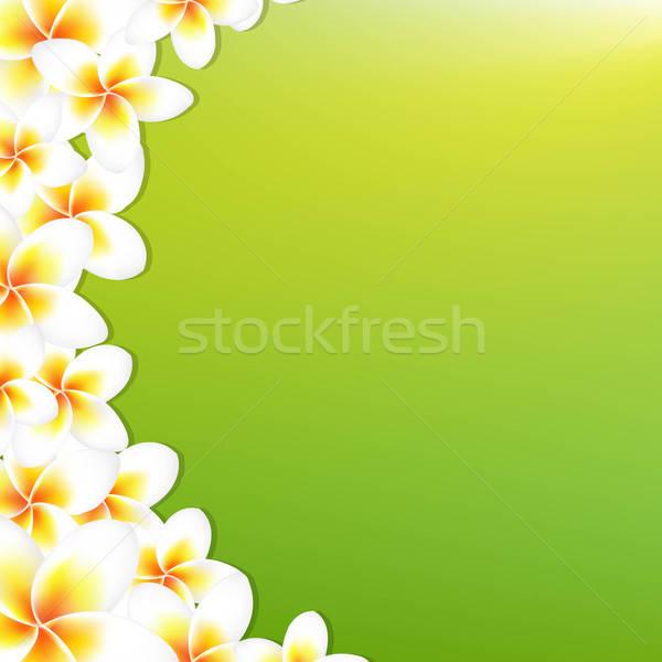 White Frangipani Border With Green Background Stock photo © barbaliss