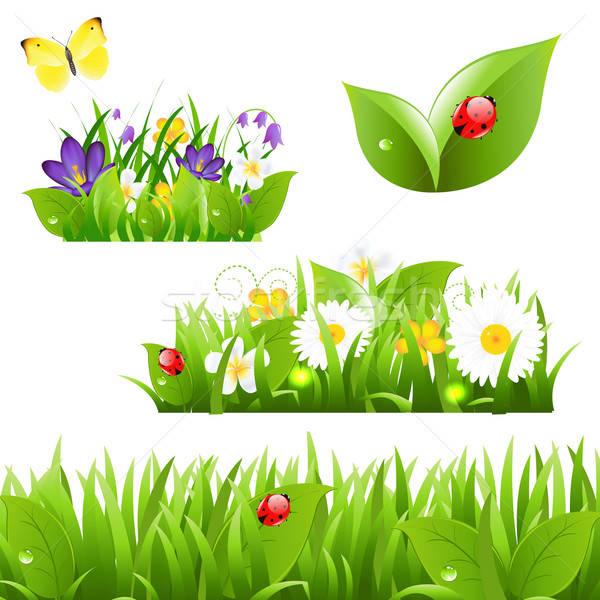 Сток-фото: цветы · трава · бабочка · Ladybug · изолированный · белый