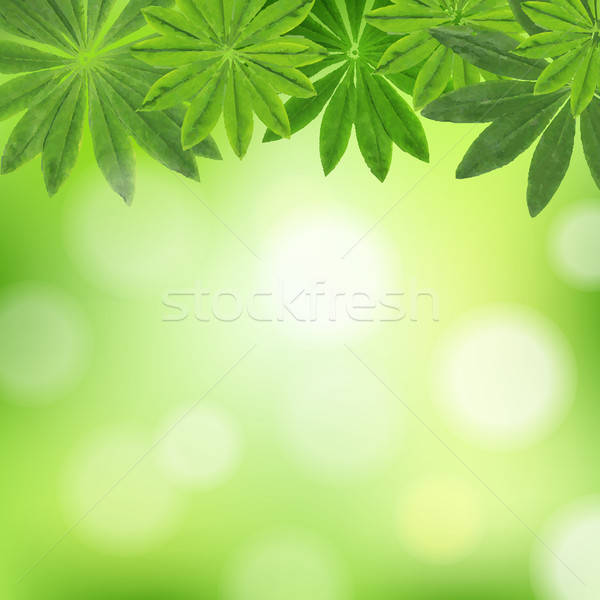 Leaves Border Stock photo © barbaliss