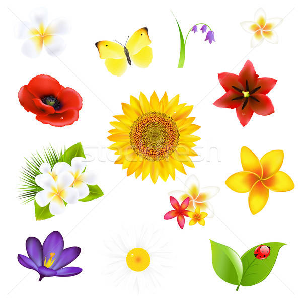 Сток-фото: большой · цветы · лист · набор · весны · бабочка