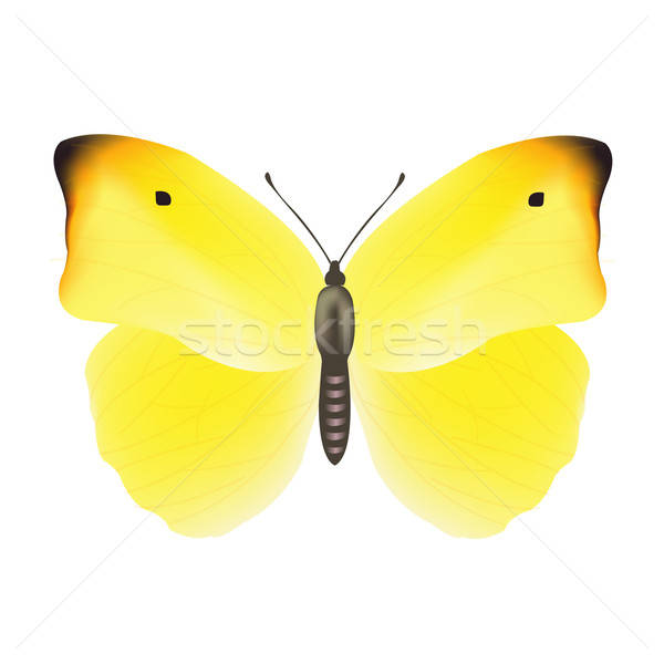 Butterfly Stock photo © barbaliss