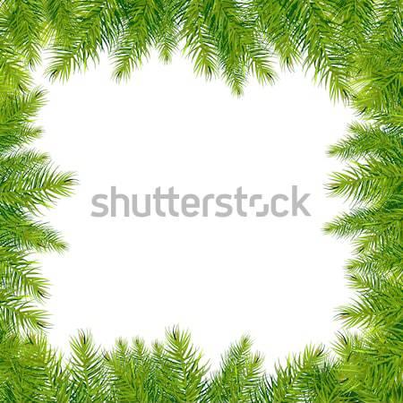 Albero di natale rami confine isolato bianco natura Foto d'archivio © barbaliss
