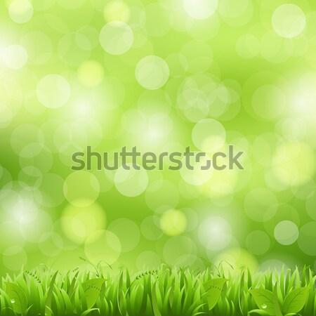 Naturaleza hierba bokeh cielo flor belleza Foto stock © barbaliss