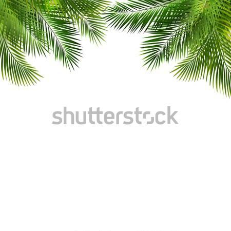 Karácsony zöld váz bogyó gradiens háló Stock fotó © barbaliss