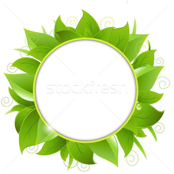 Marco hojas verdes aislado blanco naturaleza fondo Foto stock © barbaliss