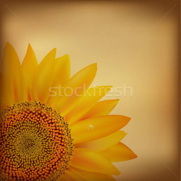 Vintage Paper With Sunflower Stock photo © barbaliss