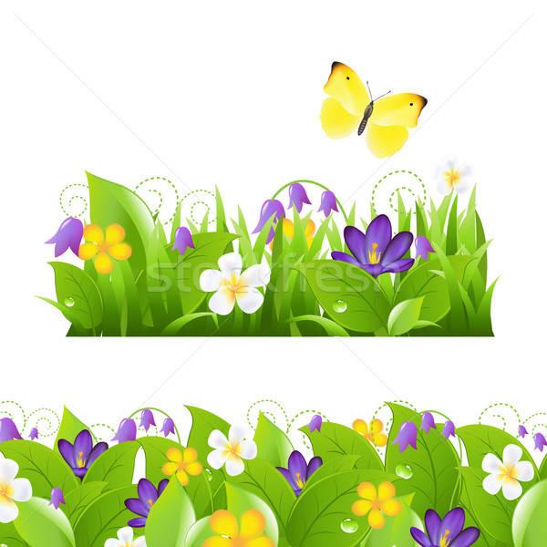Flores establecer flor aislado blanco Foto stock © barbaliss
