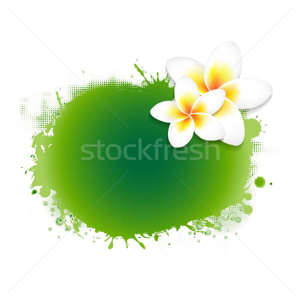 Frangipani Flower With Green Blob Stock photo © barbaliss