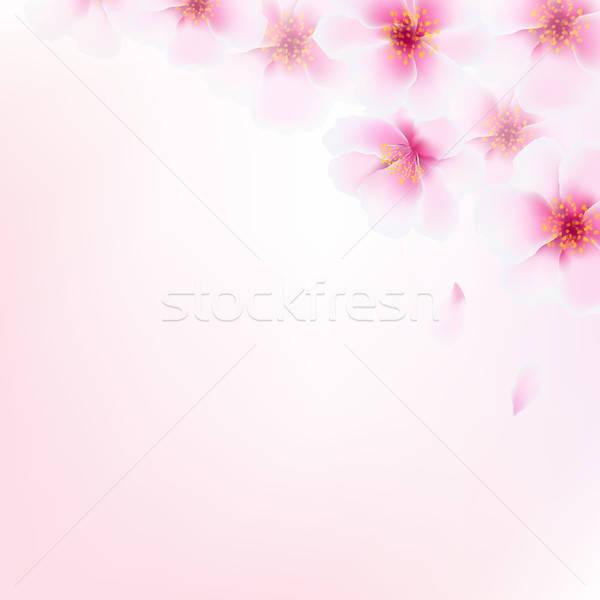 Stockfoto: Roze · kers · bloemen · helling · blad