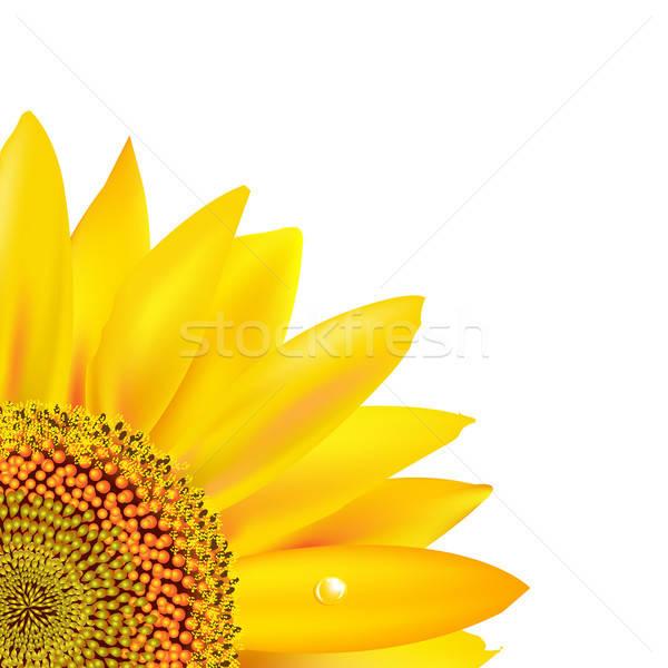 ストックフォト: ヒマワリ · 孤立した · 白 · 花 · 春 · 自然