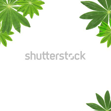 Green Leaves Frame Stock photo © barbaliss