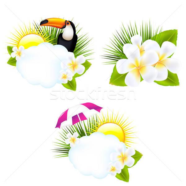 Tropische illustraties geïsoleerd witte zon blad Stockfoto © barbaliss