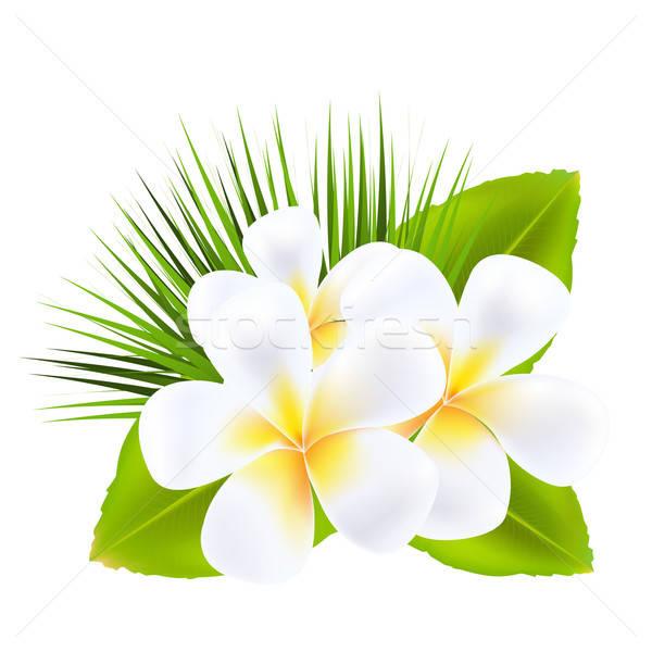 Aislado blanco flor naturaleza hoja relajarse Foto stock © barbaliss