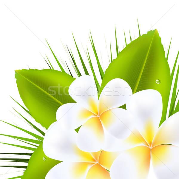 Beautiful Frangipani Stock photo © barbaliss