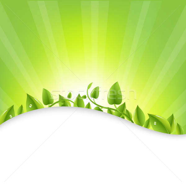 Green Leaves With Sunburst  Stock photo © barbaliss