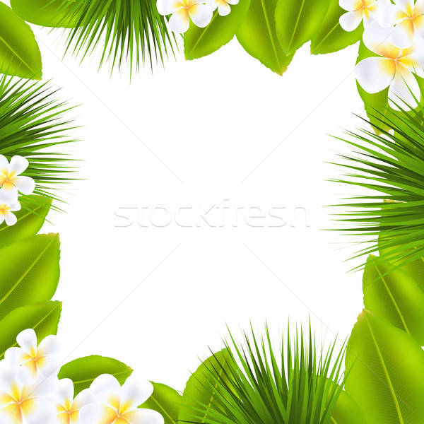 Frame With Frangipani And Leaf Stock photo © barbaliss