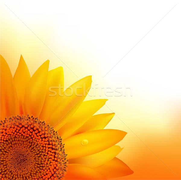 ストックフォト: ヒマワリ · 花 · 春 · 自然 · 白 · 美しい