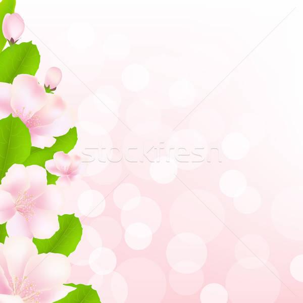 商业照片: 苹果树 · 花卉 · 背景虚化 · 食品 · 苹果 · 健康