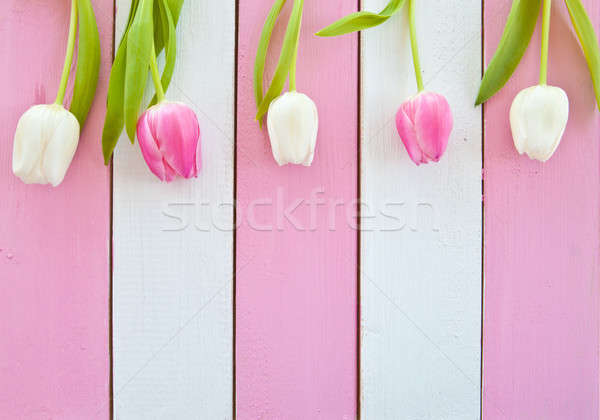 Fresh tulips on pink and white Stock photo © BarbaraNeveu