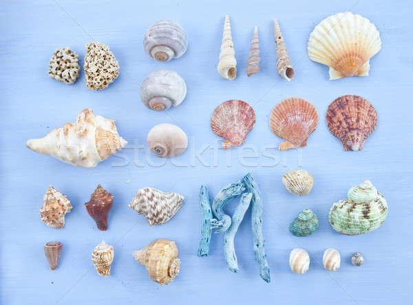 разнообразие морем снарядов ногтя синий Сток-фото © BarbaraNeveu