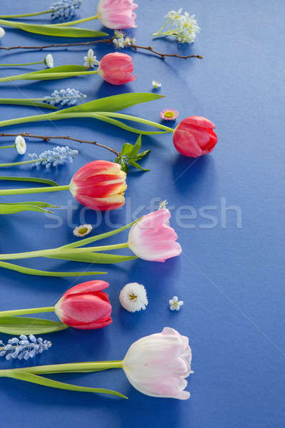 Színes tavaszi virágok kék választék virágok szeretet Stock fotó © BarbaraNeveu