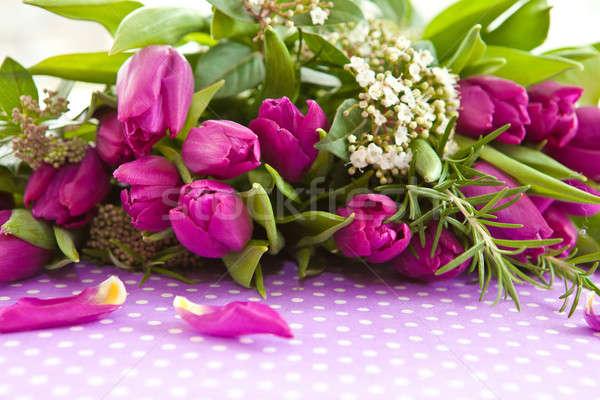 Fresh purple tulips Stock photo © BarbaraNeveu