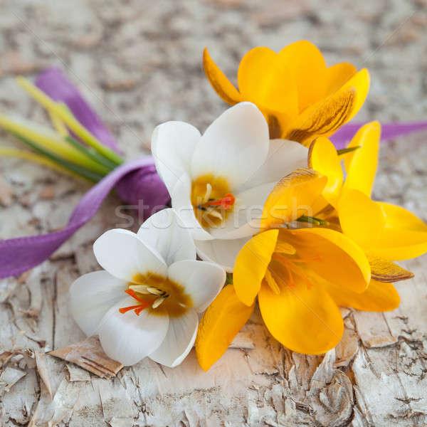 Küçük buket taze çiğdem çiçekler huş ağacı Stok fotoğraf © BarbaraNeveu