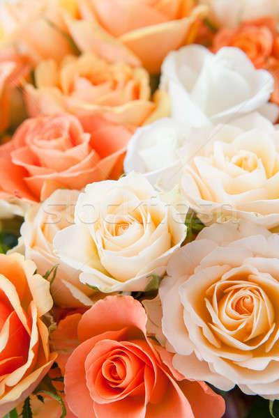Roses in detail Stock photo © BarbaraNeveu