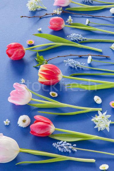 Kleurrijk lentebloemen Blauw variëteit bloemen liefde Stockfoto © BarbaraNeveu