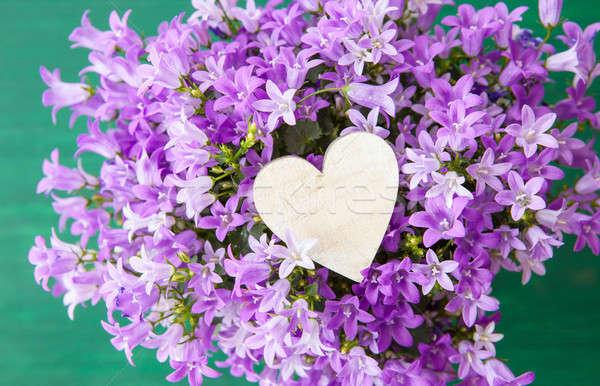 Purple bellflowers Stock photo © BarbaraNeveu