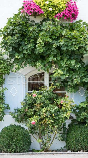 окна традиционный жалюзи лозы цветы Сток-фото © BarbaraNeveu