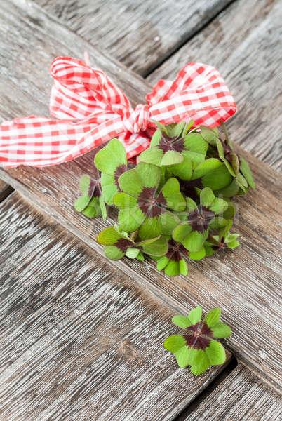 Little bunch of clovers Stock photo © BarbaraNeveu