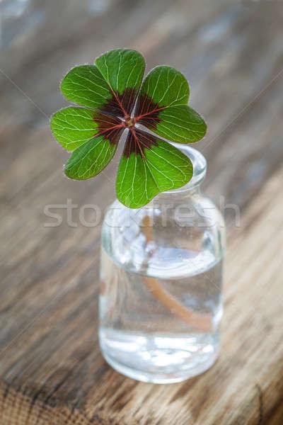 Single clover in little bottle Stock photo © BarbaraNeveu