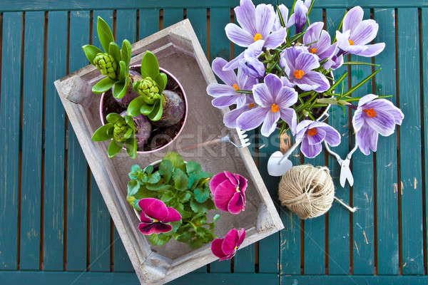 Various potted spring flowers Stock photo © BarbaraNeveu
