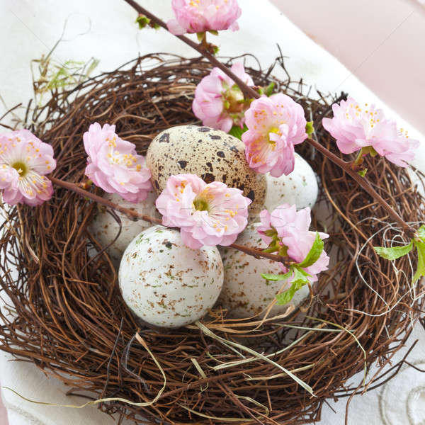 Little easter nest with quail eggs Stock photo © BarbaraNeveu