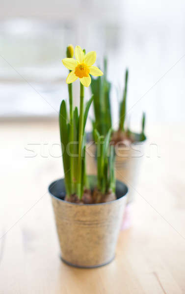 Narcis bloeien vintage tin Pasen voorjaar Stockfoto © BarbaraNeveu