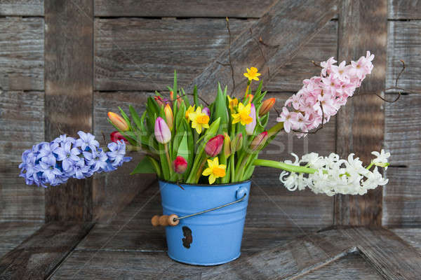 Coloré fleurs du printemps vintage bleu seau fleurs Photo stock © BarbaraNeveu